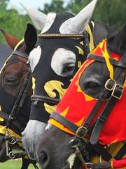 DSCF3905 (SierPinskiA) Tags: ruffordabbeycountrypark rufford knightsofnottingham fujixs1 jousting medieval horse knights goldeneagle falcon