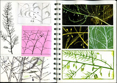 img167 (Martin Blunt) Tags: asparagus watercolour rough ideas sketchbook penink postitnote pencil thoughts observational drawing doublepagespread sgraffito