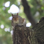 More Squirrels of The University of Pittsburgh - June 20th & 21st, 2018 (Pittsburgh, Pennsylvania) thumbnail