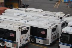 IMG_8868 (GojiMet86) Tags: mta nyc new york city bus buses 2009 2015 orion vii ng hlf xd40 4195 4201 4206 4575 7376 casey stengel depot