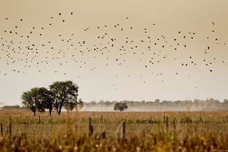 Argentina Luxury Dove Hunting 44