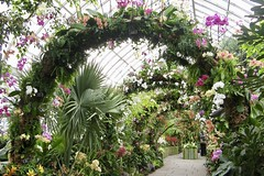 Orchid Arbor (Anne Marie Clarke) Tags: greenhouse conservatory orchidshow newyorkbotanicalgarden 2008 flowers blooms arbor bower path orchids