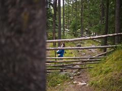 jasper 2017 030 (adamlucienroy) Tags: jasper jaspernationalpark nationalpark forest gh4 panasonic telephoto leica primelens prime 25mm f14 alberta edmonton yeg yegdt canada