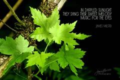 227/365 - Daily Haiku: Dappled (James Milstid) Tags: dailyhaiku haikuaday haiku haiga poetry jemhaiku dappled