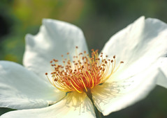 Flower Center (Orbmiser) Tags: mzuikoed1240mmf28pro 43rds em1 mirrorless olympus ore portland m43rds riverplace garden flower flowers