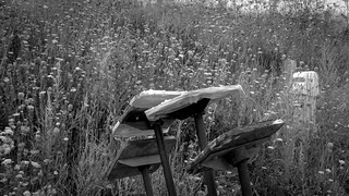 ship stands, Queen Anne's Lace, grasses, Lyman Morse Boat Yard, Thomaston, Maine, Panasonic Lumix FZ200, 8.17.18