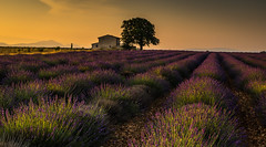 _DSC2394 (Law yvan) Tags: valensole provence sunrise lavande