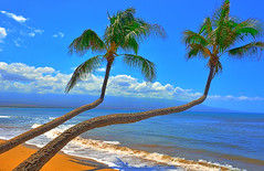 Same palm trees, different angle (Kirt Edblom) Tags: maui mauihawaii hawaii maalaeamaui maalaeabeach haycraftbeachpark coastguardbeach pacific pacificocean palmtree palm palmtrees tree trees tropical ocean wife water waves milf gaylene beach scenic sand serene seascape blue bluesky green plant clouds waterscape landscape sky kirt kirtedblom edblom easyhdr hdr nikon nikond7100 nikkor18140mmf3556