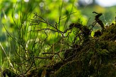 meistens unbemerkt neben unseren Pfaden (maikkregel) Tags: maikkregel sony vogelsang eifel natur licht