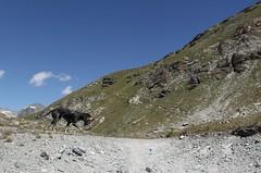 Nasco (bulbocode909) Tags: valais suisse arolla valdhérens chiens montagnes nature paysages sentiers nuages vert bleu