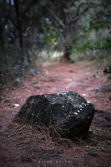 (Elton Pelser) Tags: nikon d3400 photography 50mm nifty50 nature outdoors path forest trail rock soil