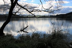 Lake Tutira on a calm afternoon (Karen Pincott) Tags: lake laketutira hawkesbay water winter newzealand napier calm trees