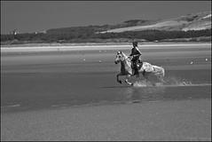Katze_Tempo_SAS_2461 (SAS Photographie) Tags: beach strand plage letouquet france frankreich pferd horse cheval riding reiten reitsport haflinger nikon d610 afsnikkor nikkor 70200 28