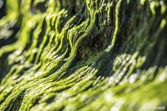 Cousin It (red stilletto) Tags: phillipisland basscoast capewoolamai capewoolamaibeach rockpool rockpools seaweed beach sea ocean