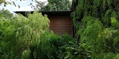house with wooden blinds (j0035001-2) Tags: garden nature park house blinds brown tree singapore