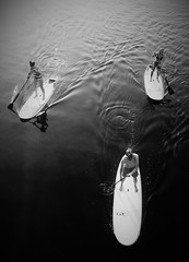 Three and Easy (Henry Hemming) Tags: boarders boardsurfers paddling watersports three harbour river man twowomen tallinn estonia mono bw shape ripple steer sony rx100