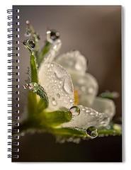 strawberry-flower-carlene-smith (Fine Arts Designer) Tags: notebook notebooks writing write stationaery paper spiral