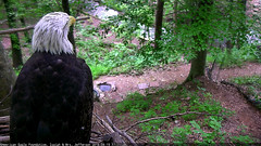 Dollywood Eagle (heights.18145) Tags: dollywood eggs eagles isaih mrsjefferson aef ccncby