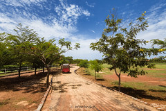 (Irene Becker) Tags: africa flametrees imagesofnigeria kaduna kadunastate nigeria nigerianimages nigerianphotos northnigeria westafrica lanscape northernnigeria kwarau