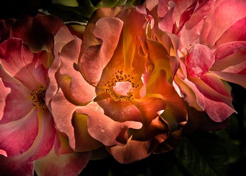 Backyard Flowers 40 Color Version