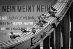Tauben Eiserner Steg (maik_sen) Tags: tauben doves animal tiere eisernersteg frankfurt hessen ffm blackwhite black white architecture architektur brücke bridge