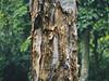 Tree (Jukai Fujiki) Tags: hiking nature naturaleza wild rain tree outdoor hongkong colors peaceful plants a6000 sony forest green landscape leisure life lonesome