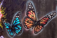 P8120074 (bon97900) Tags: 2018 generalphotosoddball art artistic butterflies metro portadelaide southaustralia texture weathered