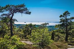 Sea View (bjorbrei) Tags: sea ocean coast fjord sky water forest pines pineforest hill view backlight shimmer shimmering oslofjord færder sprinkelet gressvikmarka gressvik fredrikstad onsøy norway