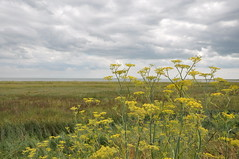 Pegwell Bay 1660 (Kent Country Parks) Tags: summer autumn spring pegwellbay country countryside kentcountryparks kent