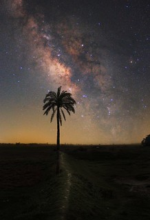 Lone tree under The Milky Way.