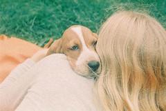 Cuddly (m-og-m) Tags: adox color implosion 100 dog basset hound