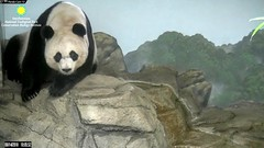 2018_08-14d (gkoo19681) Tags: meixiang beautifulmama sopretty proudmama adorableears brighteyed fuzzywuzzy onalert concernedmama nothappy poormama amazing perfection precious foreveryoung ccncby nationalzoo