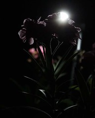Night portrait #original#canon#eos1300d (sanketdeshpande773) Tags: canon original eos1300d