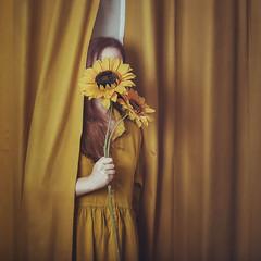 Escondite (Teresa Risco) Tags: yellow amarillo sunflower selfportrait selfportraiture hidden noface mystery girl curtain flower flowers hand holding mano manos misterio escondida retrato autorretrato dress vestido surreal conceptual