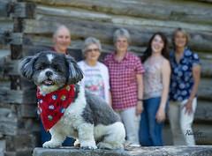 Carol's Birthday (Rainfire Photography) Tags: family portrait dog shihtzu birthday session nikon d7200