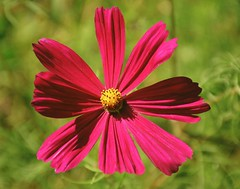 Sparkling Pink (barbara_donders) Tags: natuur nature summer zomer flower bloem pink roze bokeh macro beauty beautiful magical mooi prachtig