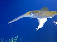 IMG_1411 (paschulea) Tags: monterey aquarium