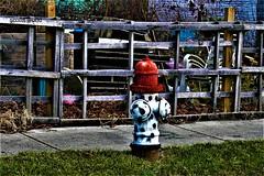 HFF-from the Detroit Industrial Gallery (SCOTTS WORLD) Tags: adventure america angle fun fence shadow sunlight sidewalk hff hydrant green grass graffiti art detroit digital detail urban usa unitedstates urbex urbanexploring urbanart michigan midwest motown motorcity detroitindustrialgallery timburke march 2018 weathered white red whimsy