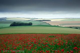 Moody skies and poppy fields