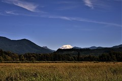 Mt Rainier always beautiful (wolf8_us) Tags: travels washingtonstate country randall morton far s trees