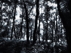 Avoiding the heat of the day...... (mark.griffin52) Tags: england hertfordshire ashridgeestate countryside forest trees woodland blackandwhite