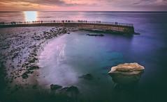 Children's Pool (Manuela Durson) Tags: lajolla childrens pool seals animals ocean sea lions seascape california coastal coast water sunset