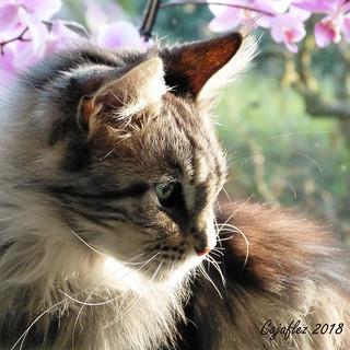 Floris in profile.