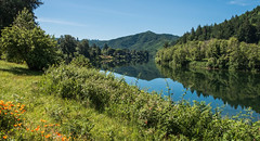 Umpqua River Scene (marvhimmel) Tags: oregoncoast umpquariver flowers poppies general