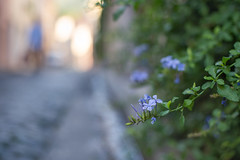 Azul (Nathalie Le Bris) Tags: azul blue bleu calle street bokeh shallowdof