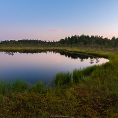 Piece of Nature. (laurilehtophotography) Tags: suomi finland leivonmäki nationalpark pond water reflections trees swamp nature landscape sky sunset nikon d750 sigma 20mm art summer 2018