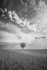 Nowhere to hide (grbush) Tags: tree lonetree lonelytree landscape minimalism minimalist monochrome blackwhite bw cambridgeshire field rural countryside farm agriculture england sonyilce7 tokinaatx116prodxaf1116mmf28 clouds dramatic