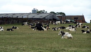Near The Milking Sheds