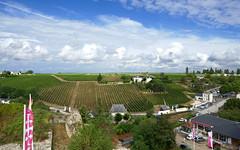 France: Chinon, Couly-Dutheil vineyards (Henk Binnendijk) Tags: chinon winery city loirevalley indreetloire paysdelaloire centrevaldeloire france frankrijk touraine vienne wine wijn vin vineyards coultydutheil domaine wijngaard