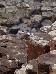 P6213954 (darrenburnham) Tags: northern ireland giantscauseway countyantrim